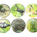 【NEW】ぐんま昆虫の森オリジナル缶バッジ