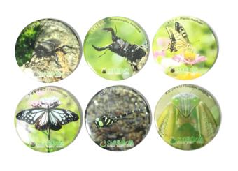 【NEW】ぐんま昆虫の森オリジナル缶バッジ -1